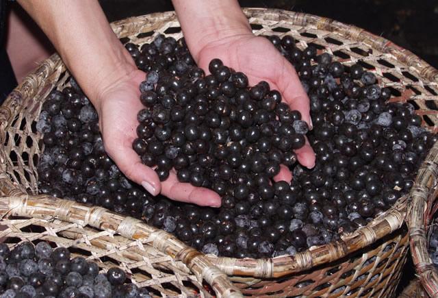 fruto acai puro