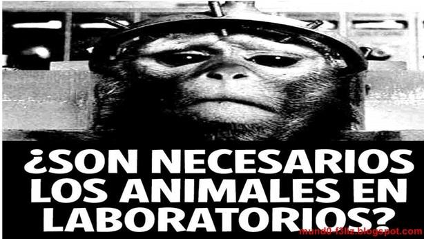 Experimentos en medicina con animales causan polémica en Brasil